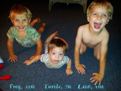 Frog, Turtle, Lion